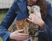 Reiki Can Help Cats